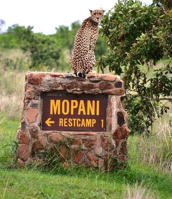 Mopani Camp - Kruger National Park
